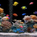 The Importance of A Fish Tanks filter