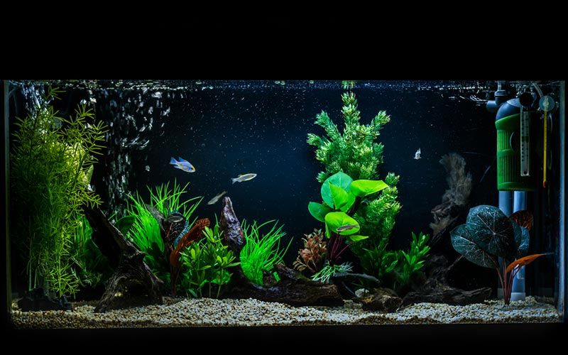best aquarium canister filter