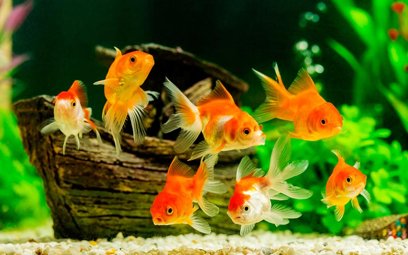 best Goldfish Tank filters