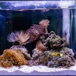 Best Nano Reef tanks