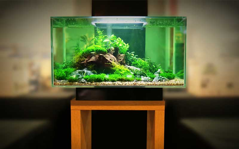 5 Gallon Fish Tanks
