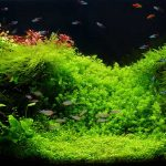 Light Spectrum for Aquarium Plants